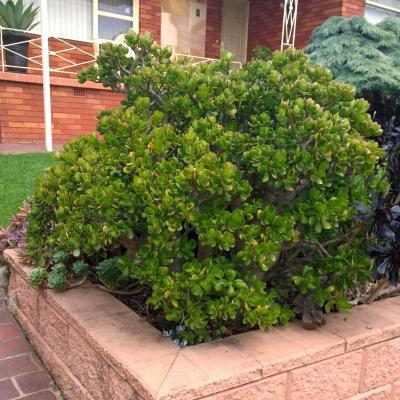 Jade Outdoors